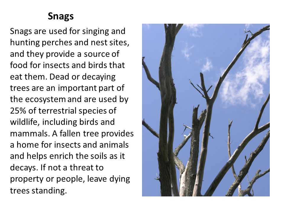Snags Snags are used for singing and hunting perches and nest sites, and they provide a source of food for insects and birds that eat them.