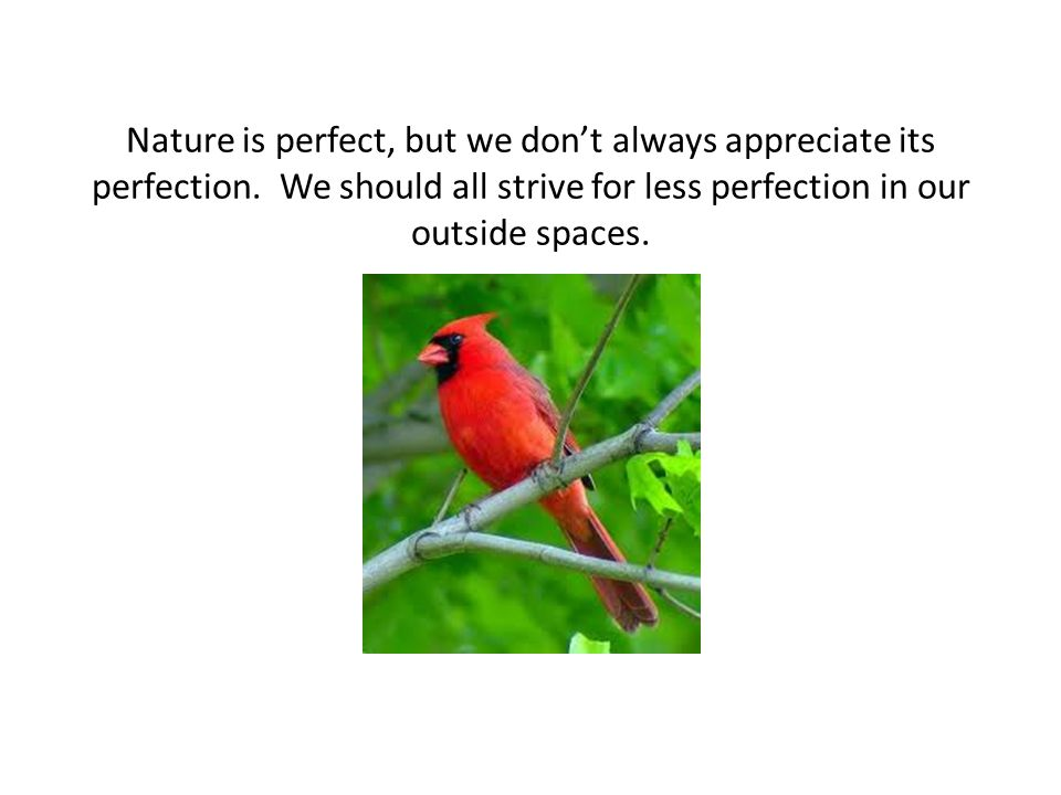 Nature is perfect, but we don't always appreciate its perfection.