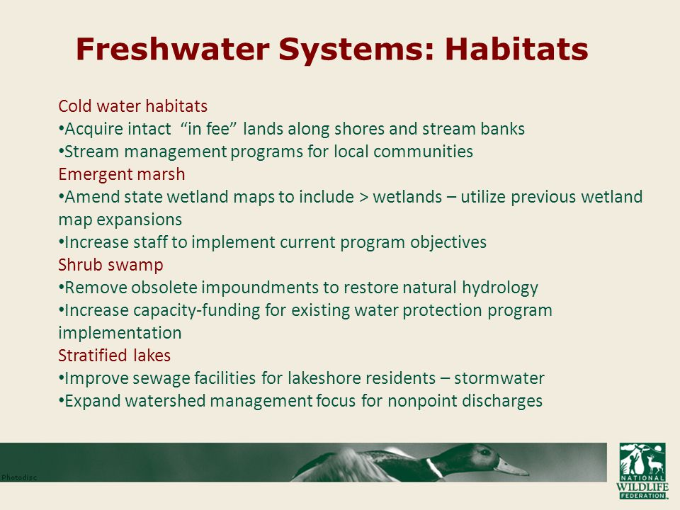 Freshwater Systems: Habitats Cold water habitats Acquire intact in fee lands along shores and stream banks Stream management programs for local communities Emergent marsh Amend state wetland maps to include > wetlands – utilize previous wetland map expansions Increase staff to implement current program objectives Shrub swamp Remove obsolete impoundments to restore natural hydrology Increase capacity-funding for existing water protection program implementation Stratified lakes Improve sewage facilities for lakeshore residents – stormwater Expand watershed management focus for nonpoint discharges