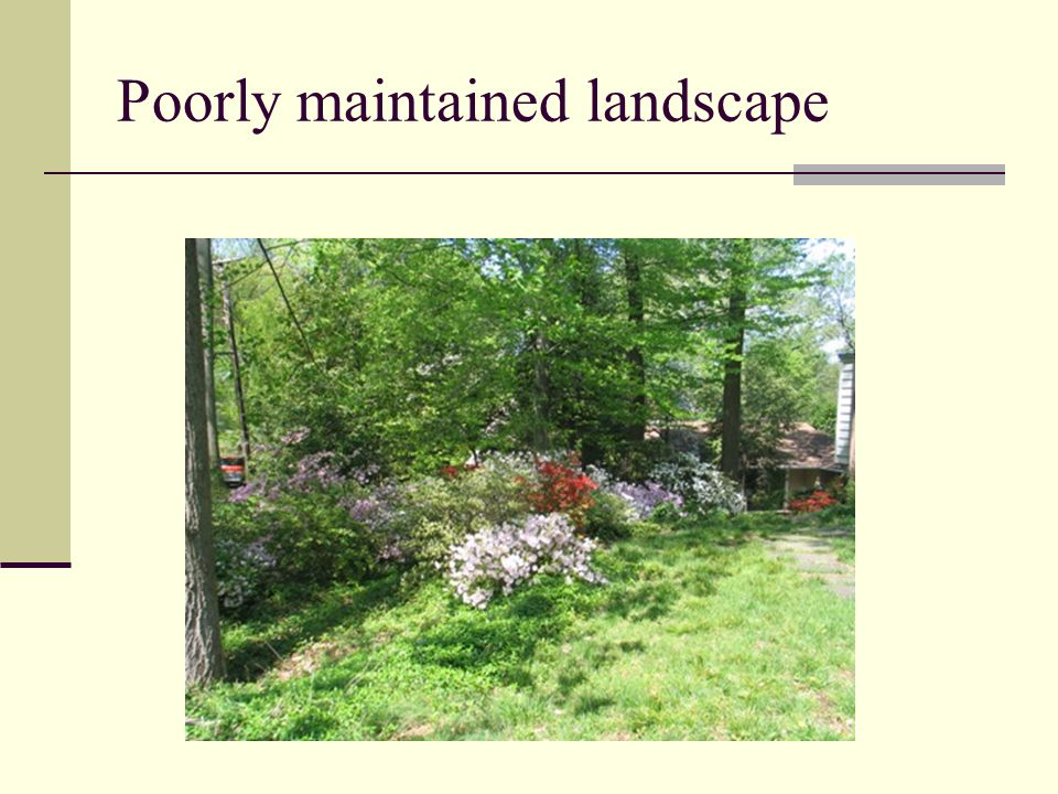 Poorly maintained landscape