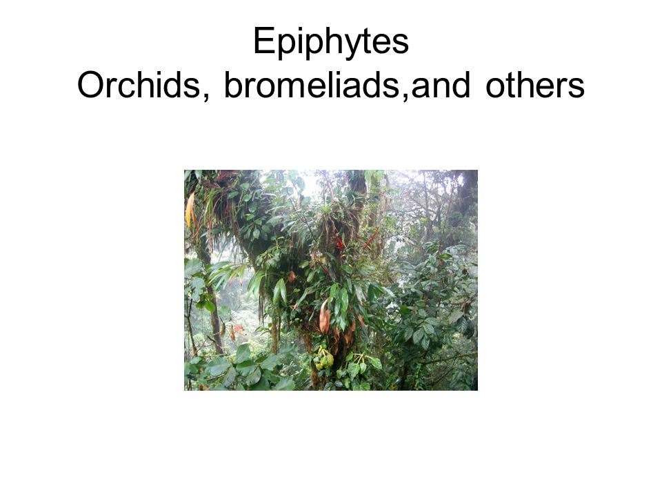 Epiphytes Orchids, bromeliads,and others