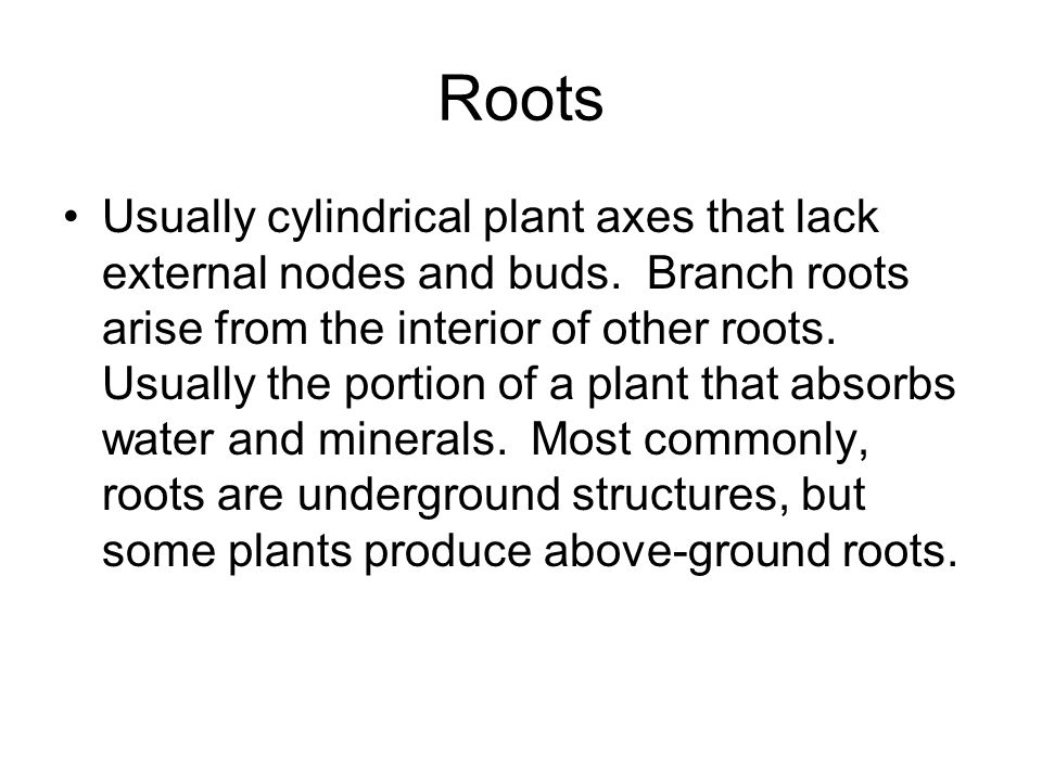 Roots Usually cylindrical plant axes that lack external nodes and buds. Branch roots arise from the interior of other roots. Usually the portion of a
