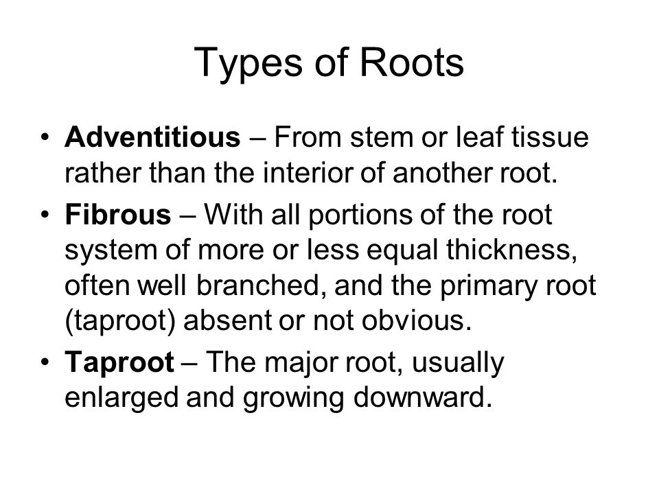 Types of Roots Adventitious – From stem or leaf tissue rather than the interior of another root. Fibrous – With all portions of the root system of mor