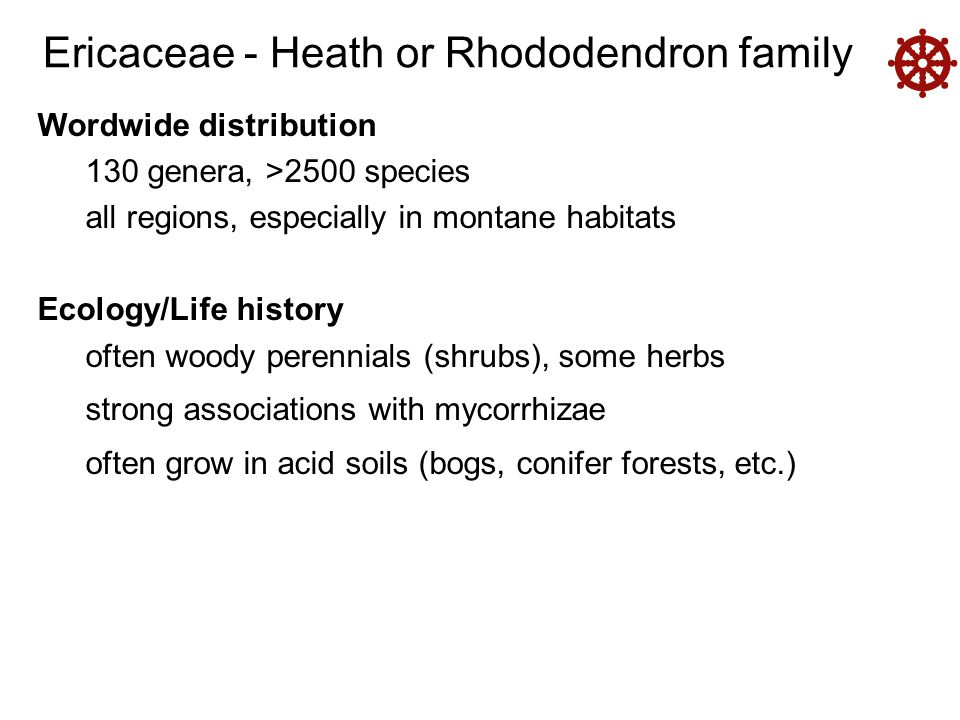 Ericaceae - Heath or Rhododendron family  Wordwide distribution 130 genera, >2500 species all regions, especially in montane habitats Ecology/Life history often woody perennials (shrubs), some herbs strong associations with mycorrhizae often grow in acid soils (bogs, conifer forests, etc.)