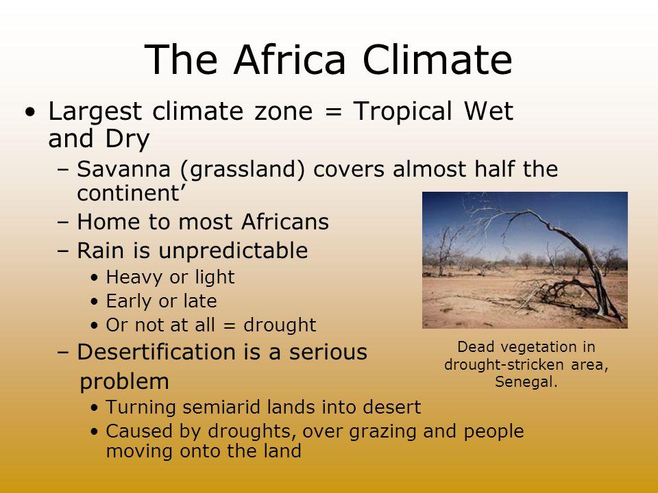 The African Vegetation Regions Rain forest Grassland Desert and dry shrub Temperate grass.land Mediterranean shrub