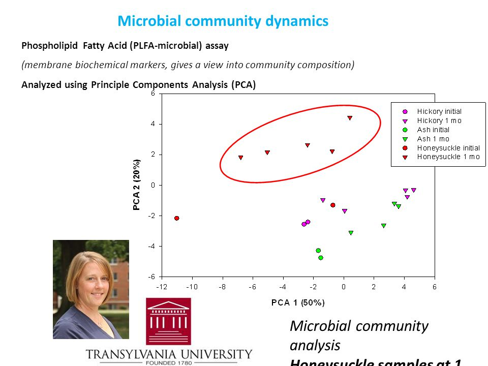 Phospholipid Fatty Acid (PLFA-microbial) assay (membrane biochemical markers, gives a view into community composition) Analyzed using Principle Components Analysis (PCA) Microbial community analysis Honeysuckle samples at 1 month differentiate from native species Microbial community dynamics