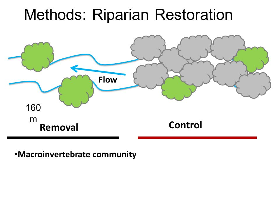 Methods: Riparian Restoration Removal Control Macroinvertebrate community 160 m Flow