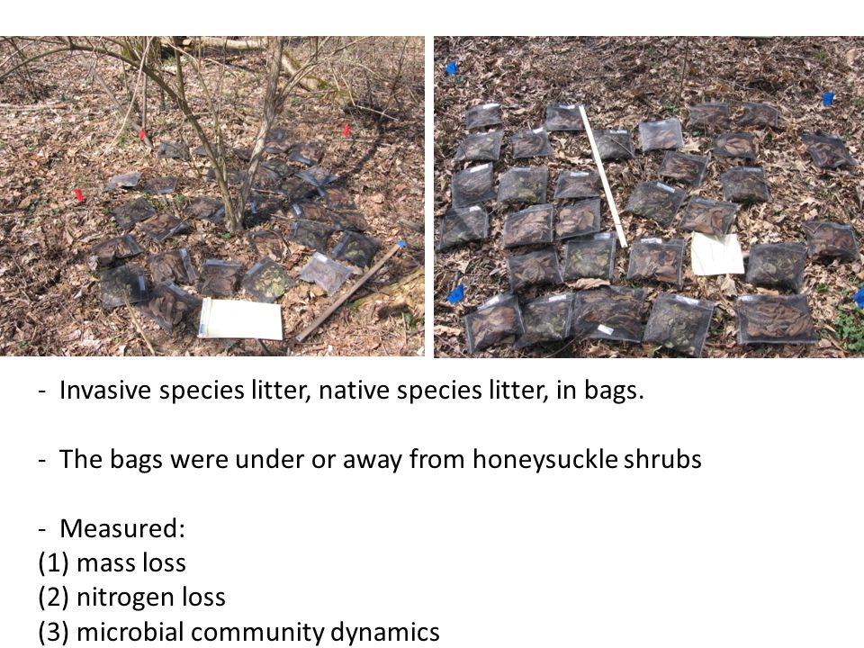 - Invasive species litter, native species litter, in bags.