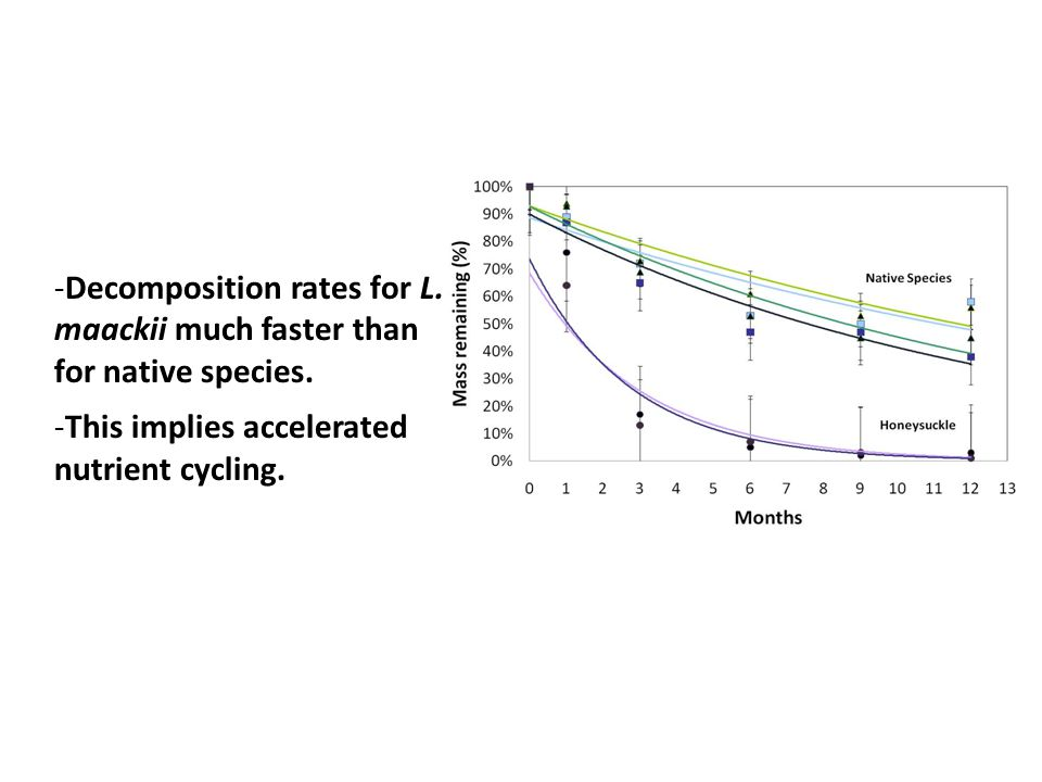 -Decomposition rates for L. maackii much faster than for native species.