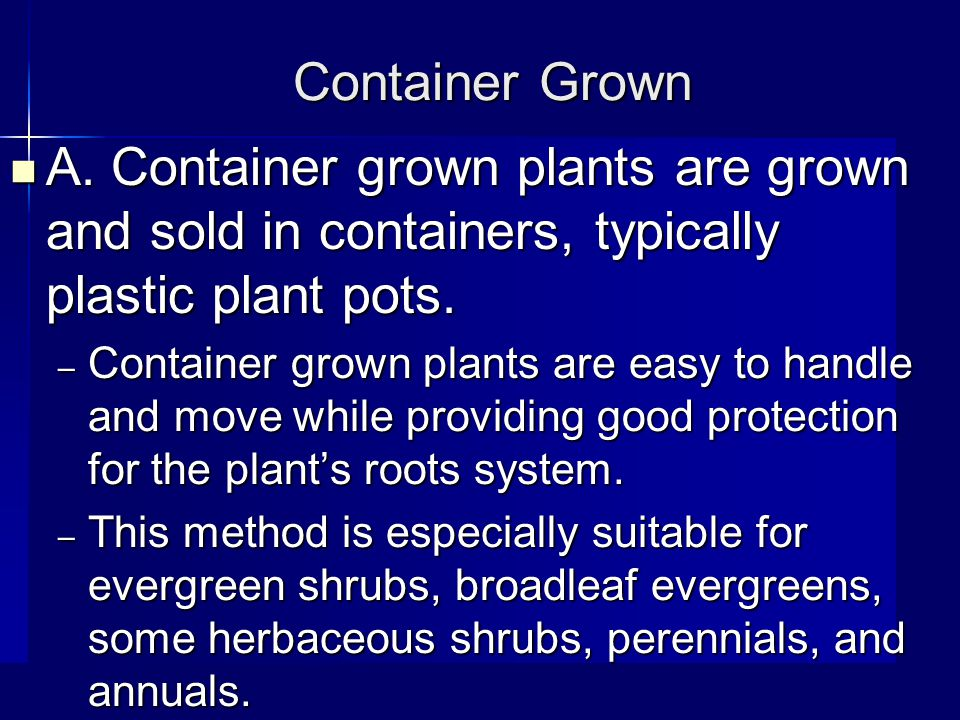 Container Grown A.
