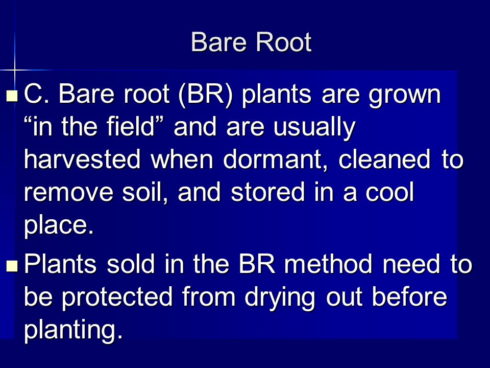 """Bare Root C. Bare root (BR) plants are grown """"in the field"""" and are usually harvested when dormant, cleaned to remove soil, and stored in a cool place"""