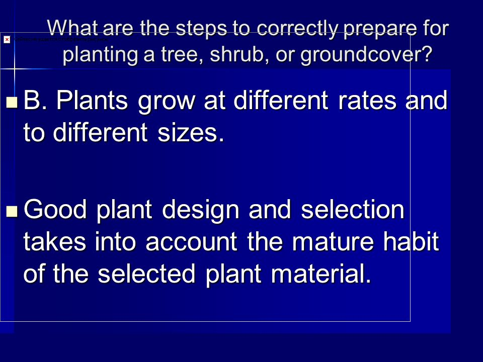 What are the steps to correctly prepare for planting a tree, shrub, or groundcover.
