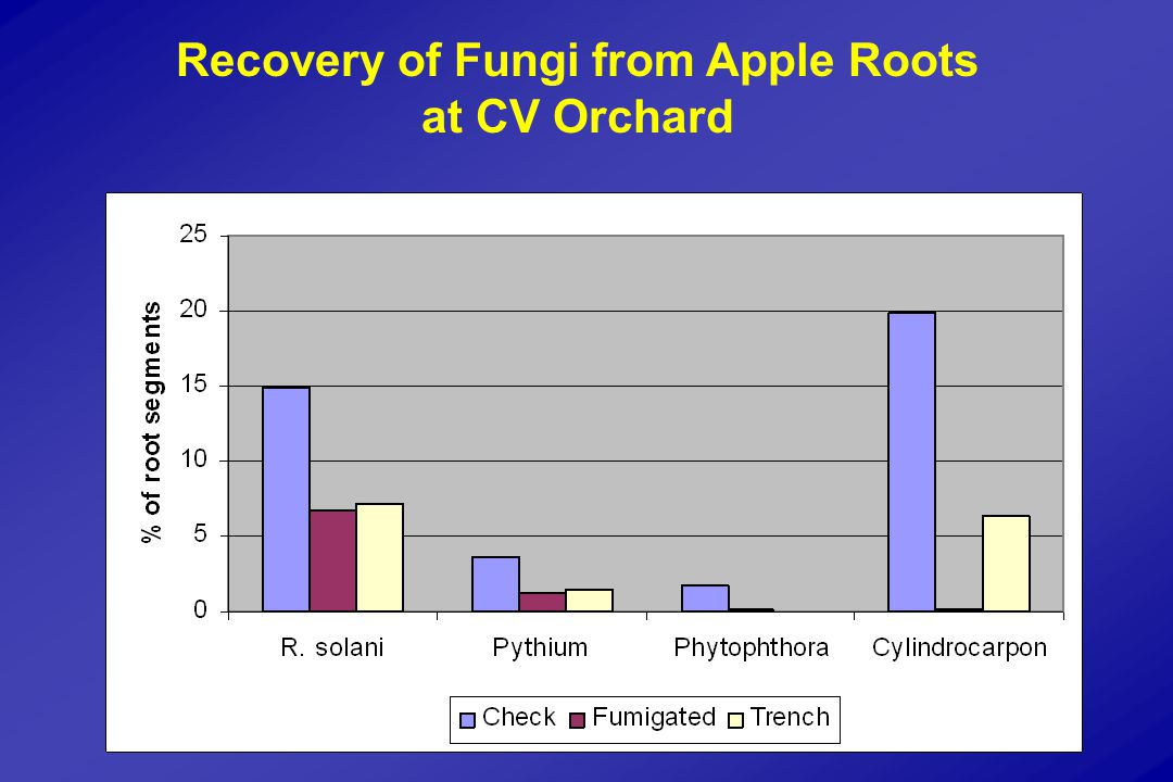 Recovery of Fungi from Apple Roots at CV Orchard