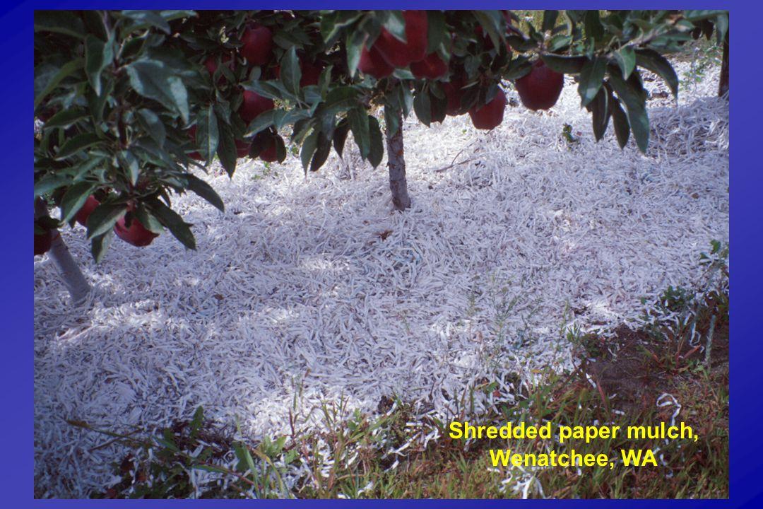 Shredded paper mulch, Wenatchee, WA