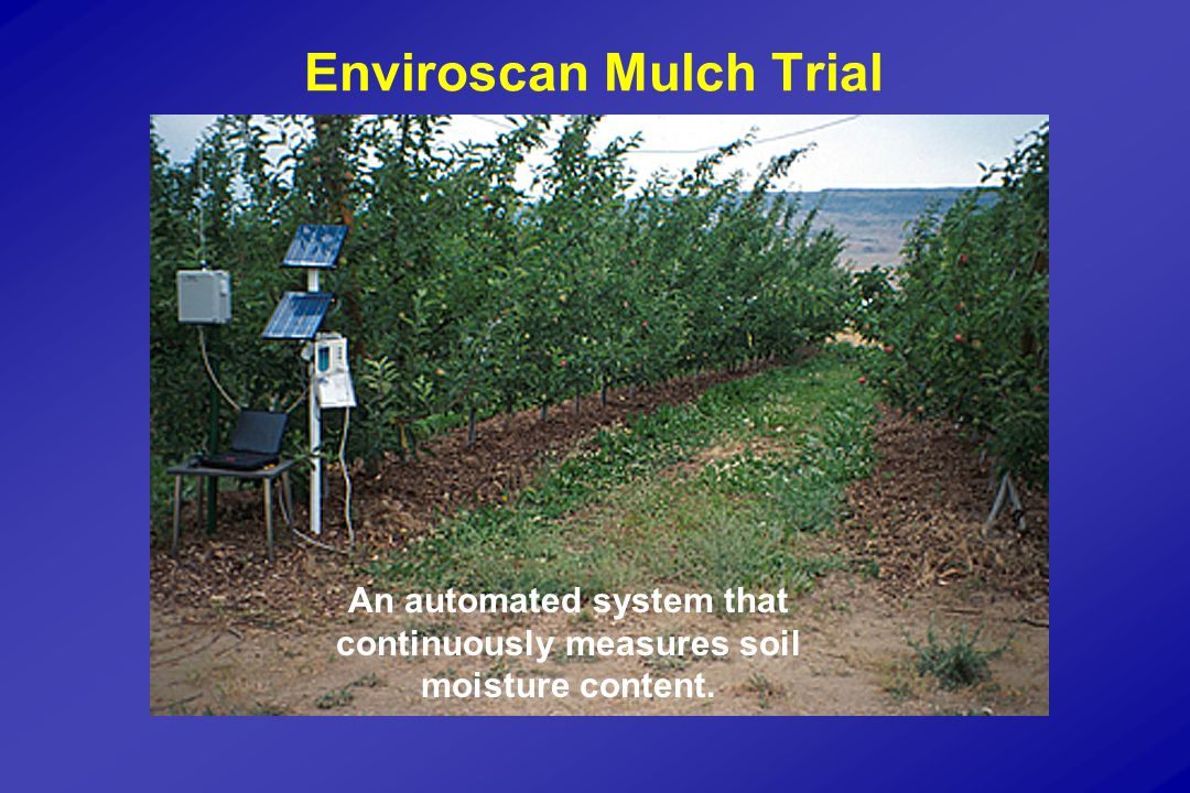 Enviroscan Mulch Trial An automated system that continuously measures soil moisture content.