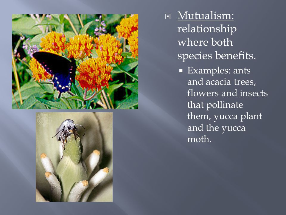  Mutualism: relationship where both species benefits.