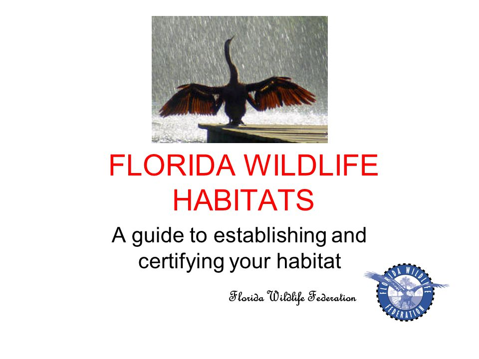 FLORIDA WILDLIFE HABITATS A guide to establishing and certifying your habitat Florida Wildlife Federation