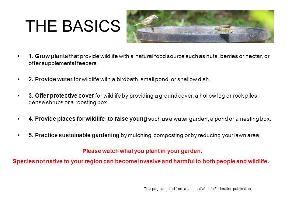 THE BASICS 1.