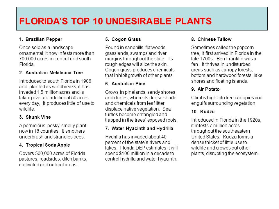 FLORIDA'S TOP 10 UNDESIRABLE PLANTS 1. Brazilian Pepper Once sold as a landscape ornamental, it now infests more than 700,000 acres in central and sou