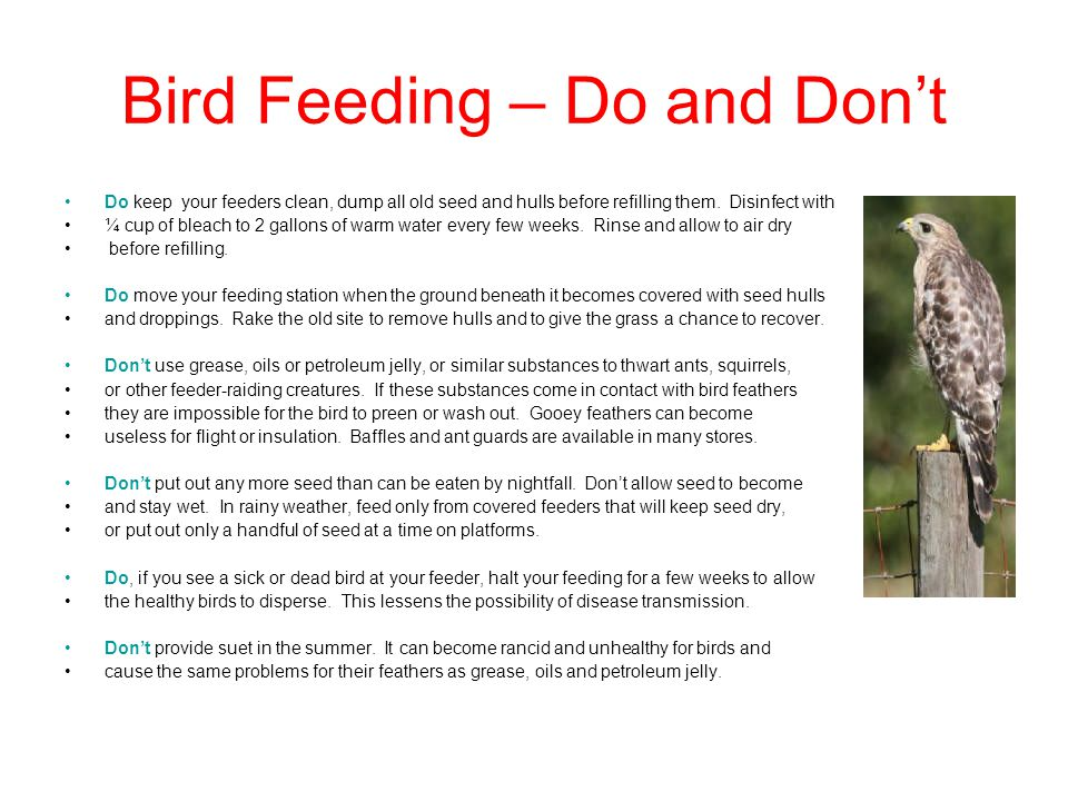 Bird Feeding – Do and Don't Do keep your feeders clean, dump all old seed and hulls before refilling them.