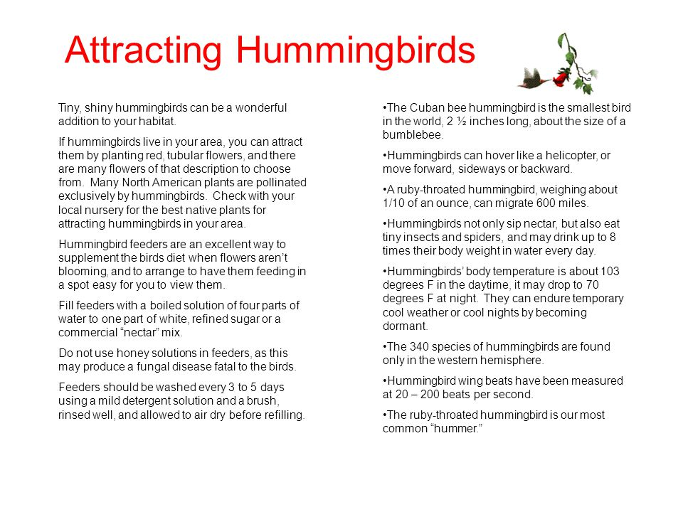 Attracting Hummingbirds Tiny, shiny hummingbirds can be a wonderful addition to your habitat.