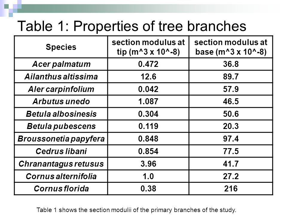 Table 1: Properties of tree branches Species section modulus at tip (m^3 x 10^-8) section modulus at base (m^3 x 10^-8) Acer palmatum0.47236.8 Ailanth