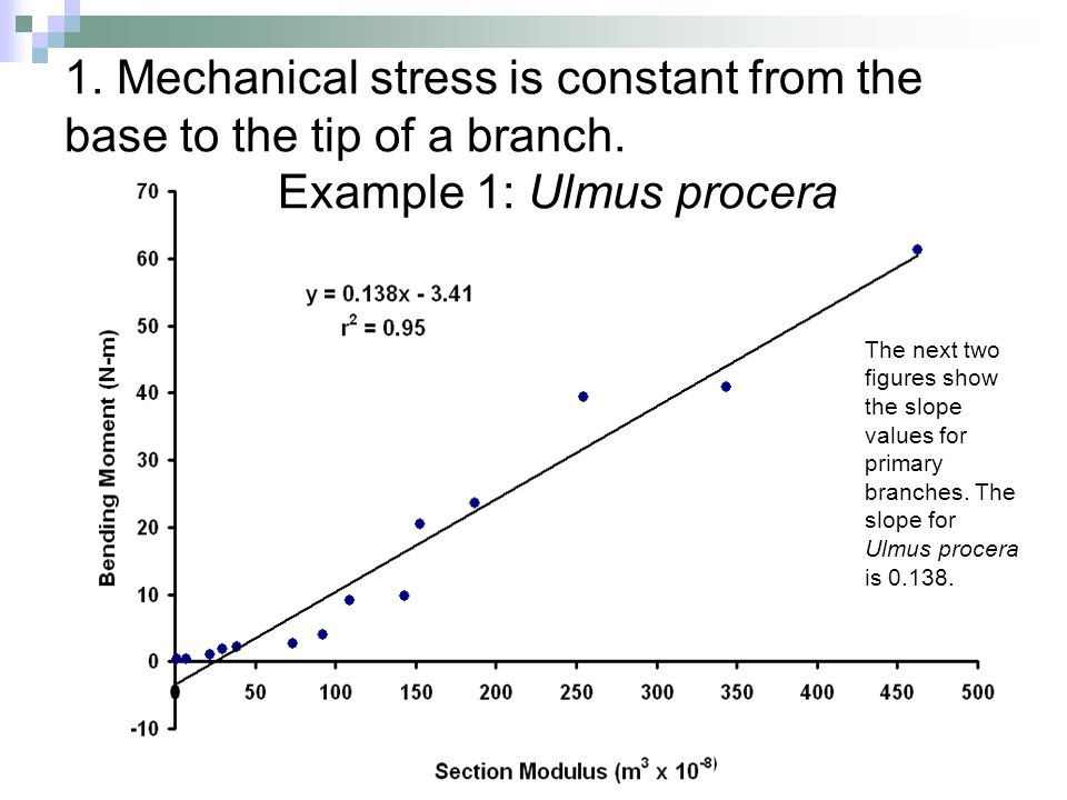 1. Mechanical stress is constant from the base to the tip of a branch. Example 1: Ulmus procera The next two figures show the slope values for primary