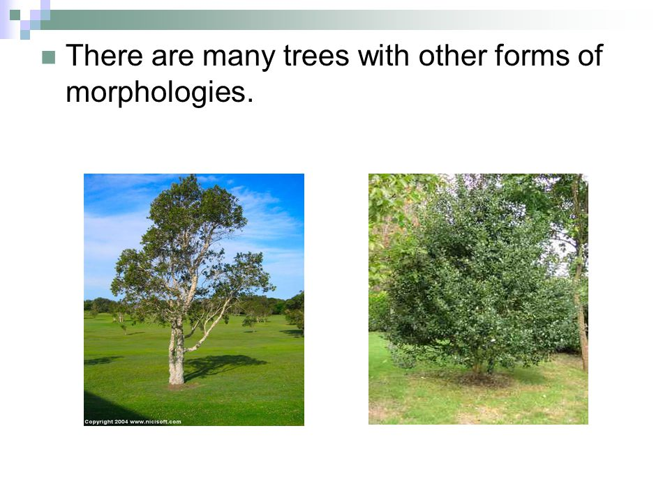 Species Branch Number Smallest Section Modulus Largest Section Modulus Probability Value Betula pubescens 10.1966.2 0.645 20.1194.18 30.9657.07 40.4478.57 Crataegus diffusa 10.492.3 0.928 20.311.4 30.492.1 40.494.6 Ulmus procera 11.7127.4 0.601 21.322 31.2121.9 40.6817.3 50.3417.9