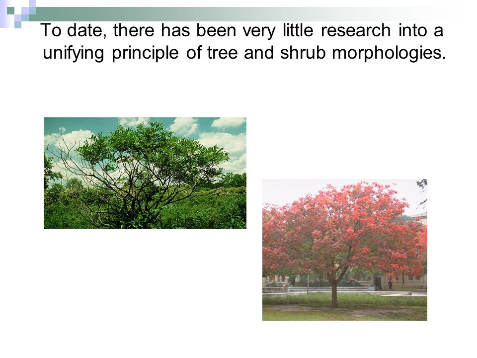 To date, there has been very little research into a unifying principle of tree and shrub morphologies.