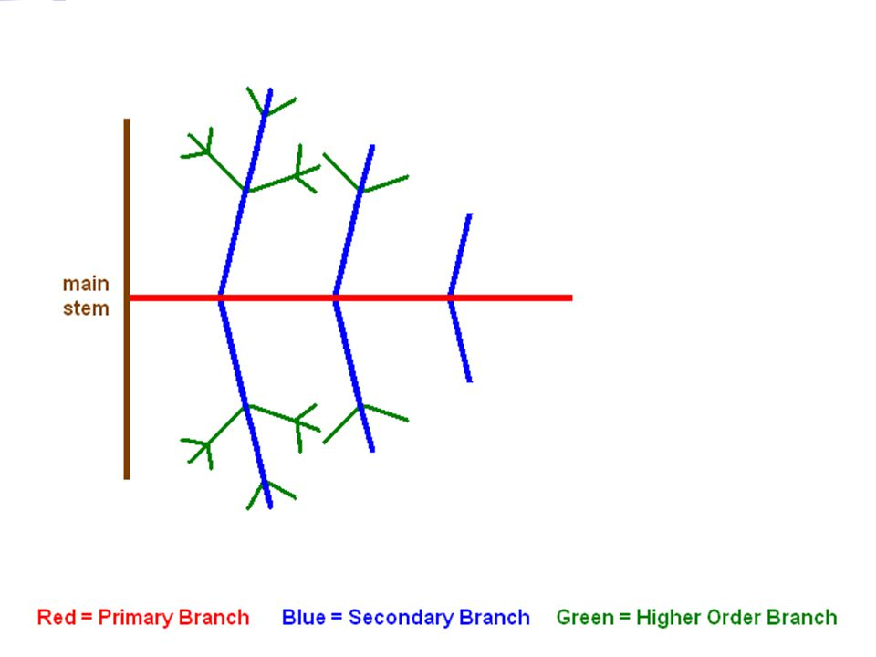 1.Mechanical stress is constant from the base to the tip of a branch.