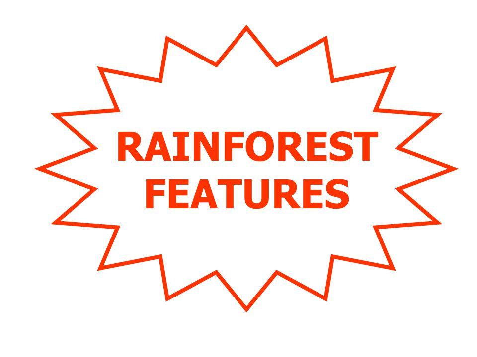 RAINFOREST FEATURES