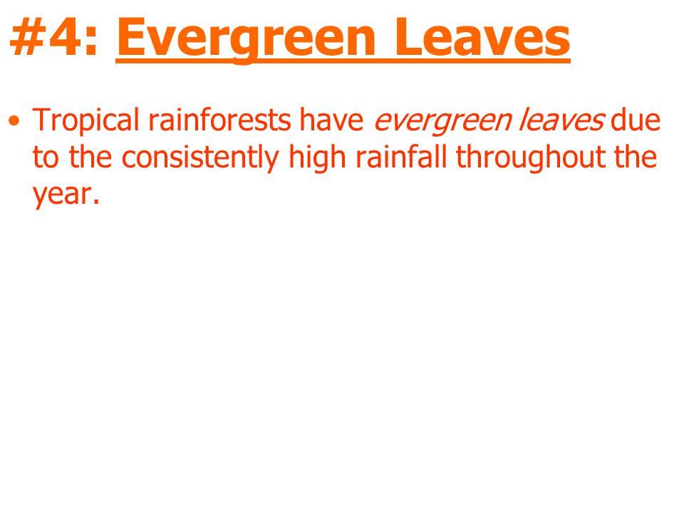 #4: Evergreen Leaves Tropical rainforests have evergreen leaves due to the consistently high rainfall throughout the year.