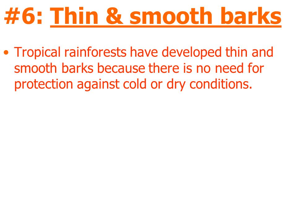 #6: Thin & smooth barks Tropical rainforests have developed thin and smooth barks because there is no need for protection against cold or dry conditions.