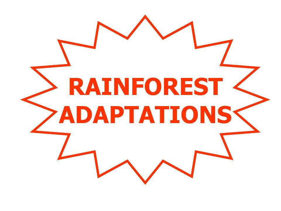 RAINFOREST ADAPTATIONS