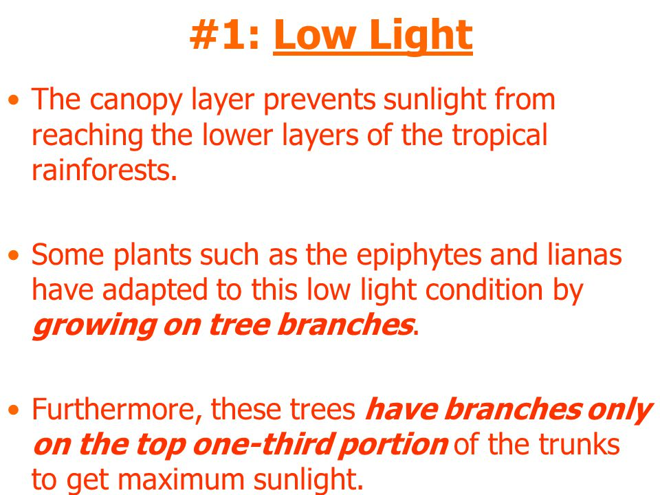 #1: Low Light The canopy layer prevents sunlight from reaching the lower layers of the tropical rainforests.
