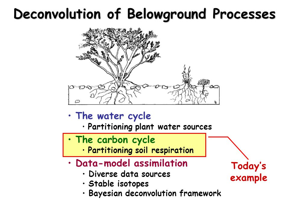 Deconvolution of Belowground Processes The water cycle Partitioning plant water sources The carbon cycle Partitioning soil respiration Data-model assimilation Diverse data sources Stable isotopes Bayesian deconvolution framework Today's example