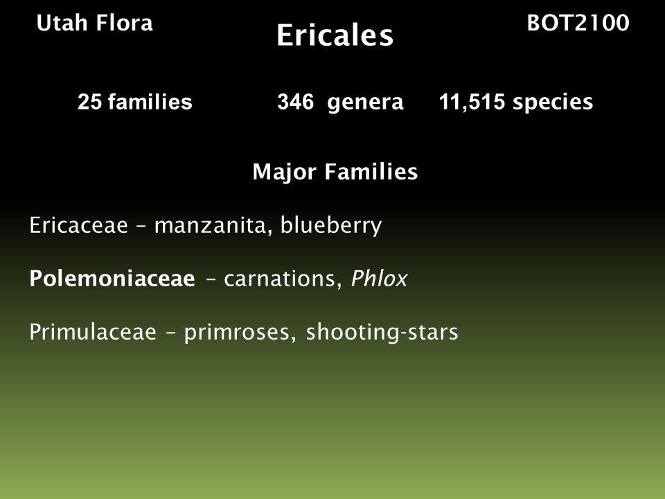 Utah Flora BOT2100 Major Families Ericaceae – manzanita, blueberry Polemoniaceae – carnations, Phlox Primulaceae – primroses, shooting-stars Ericales