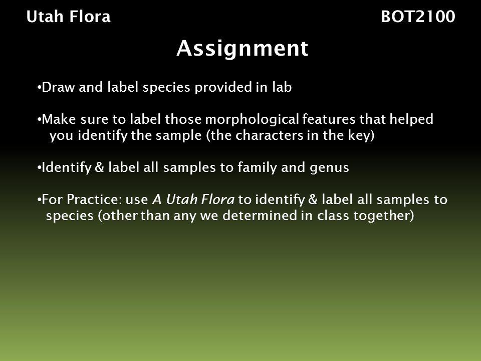 Utah Flora BOT2100 Assignment Draw and label species provided in lab Make sure to label those morphological features that helped you identify the sample (the characters in the key) Identify & label all samples to family and genus For Practice: use A Utah Flora to identify & label all samples to species (other than any we determined in class together)