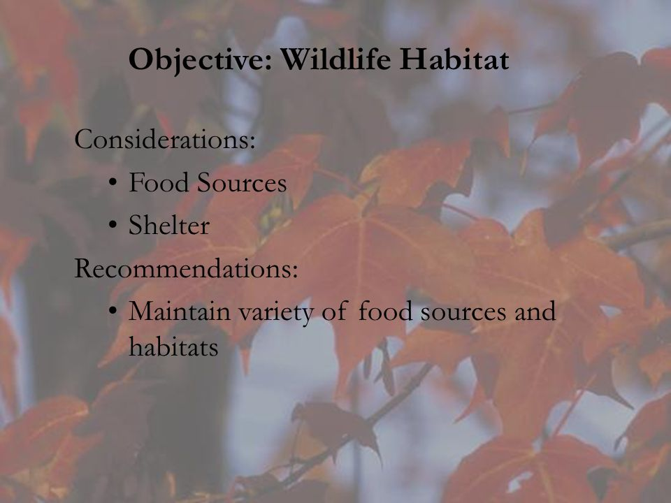 Objective: Wildlife Habitat Considerations: Food Sources Shelter Recommendations: Maintain variety of food sources and habitats