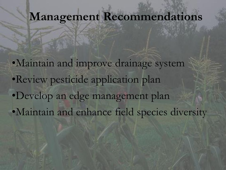 Management Recommendations Maintain and improve drainage system Review pesticide application plan Develop an edge management plan Maintain and enhance