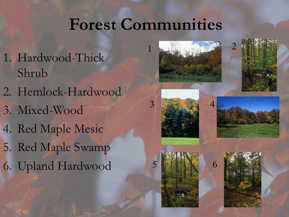 Forest Communities 1.Hardwood-Thick Shrub 2.Hemlock-Hardwood 3.Mixed-Wood 4.Red Maple Mesic 5.Red Maple Swamp 6.Upland Hardwood 1 2 34 56