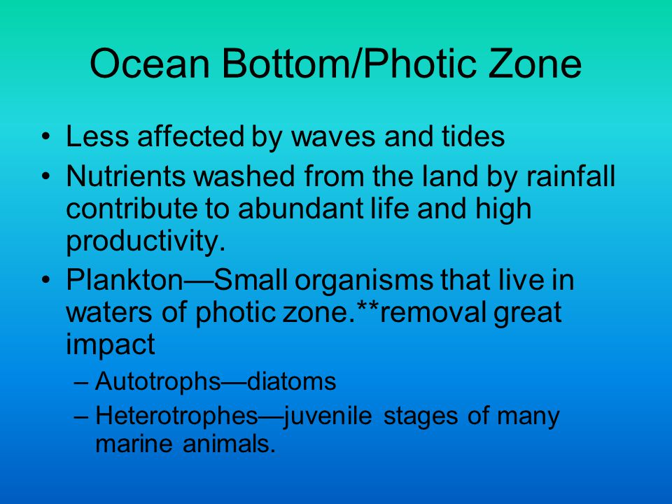 Ocean Bottom/Photic Zone Less affected by waves and tides Nutrients washed from the land by rainfall contribute to abundant life and high productivity