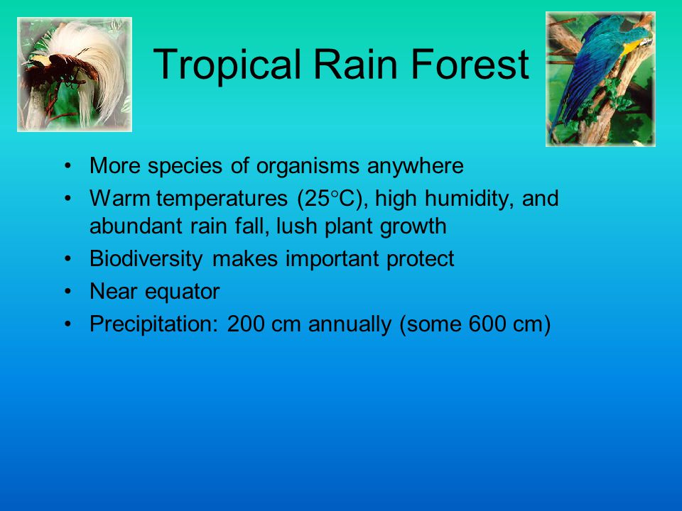 Tropical Rain Forest More species of organisms anywhere Warm temperatures (25  C), high humidity, and abundant rain fall, lush plant growth Biodivers