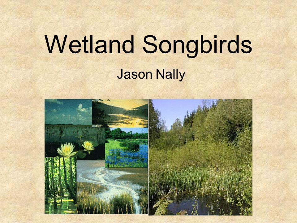 Wetland Songbirds Jason Nally