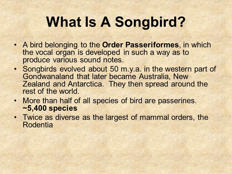 What Is A Songbird? A bird belonging to the Order Passeriformes, in which the vocal organ is developed in such a way as to produce various sound notes