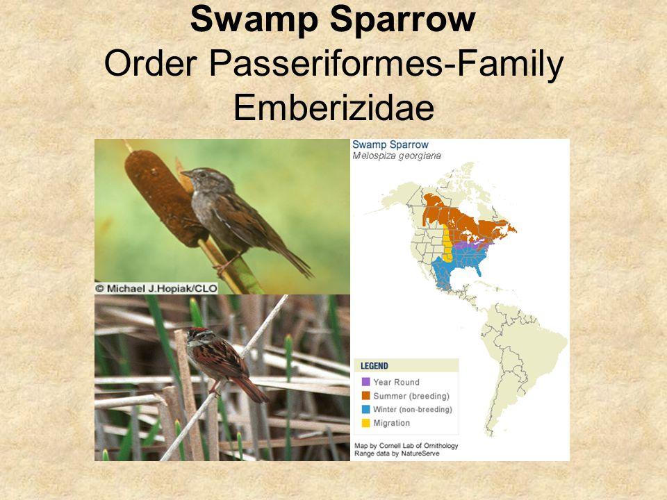 Swamp Sparrow Order Passeriformes-Family Emberizidae