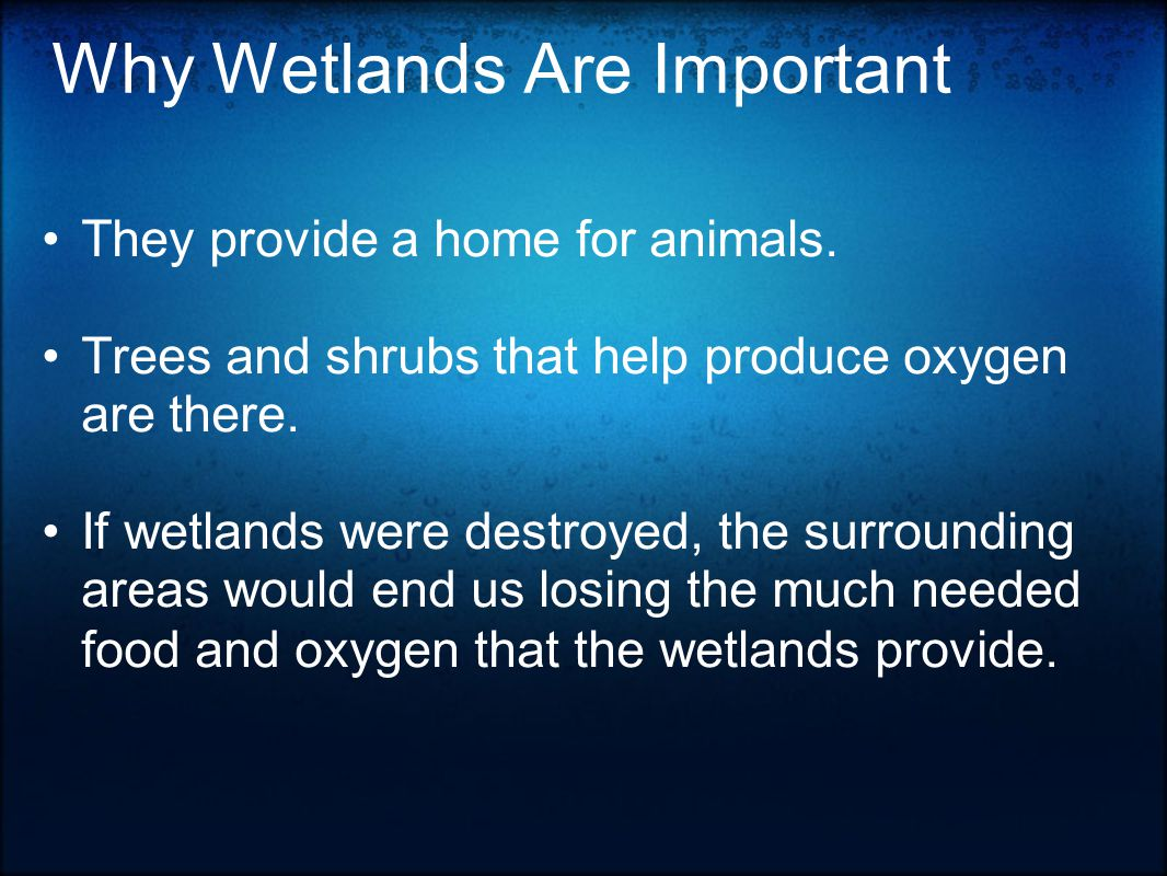 Why Wetlands Are Important They provide a home for animals.