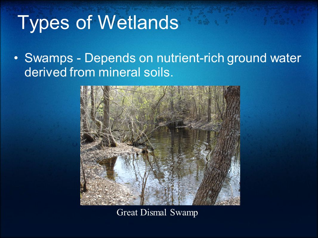 Types of Wetlands Swamps - Depends on nutrient-rich ground water derived from mineral soils.