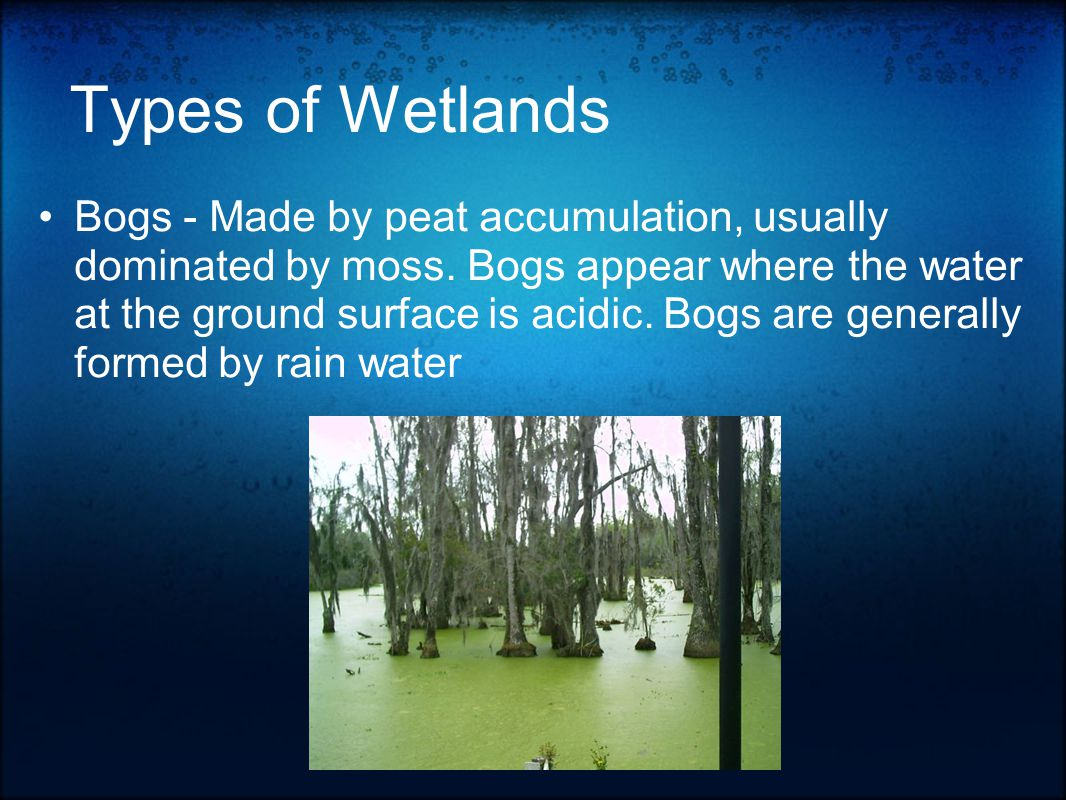 Types of Wetlands Bogs - Made by peat accumulation, usually dominated by moss.