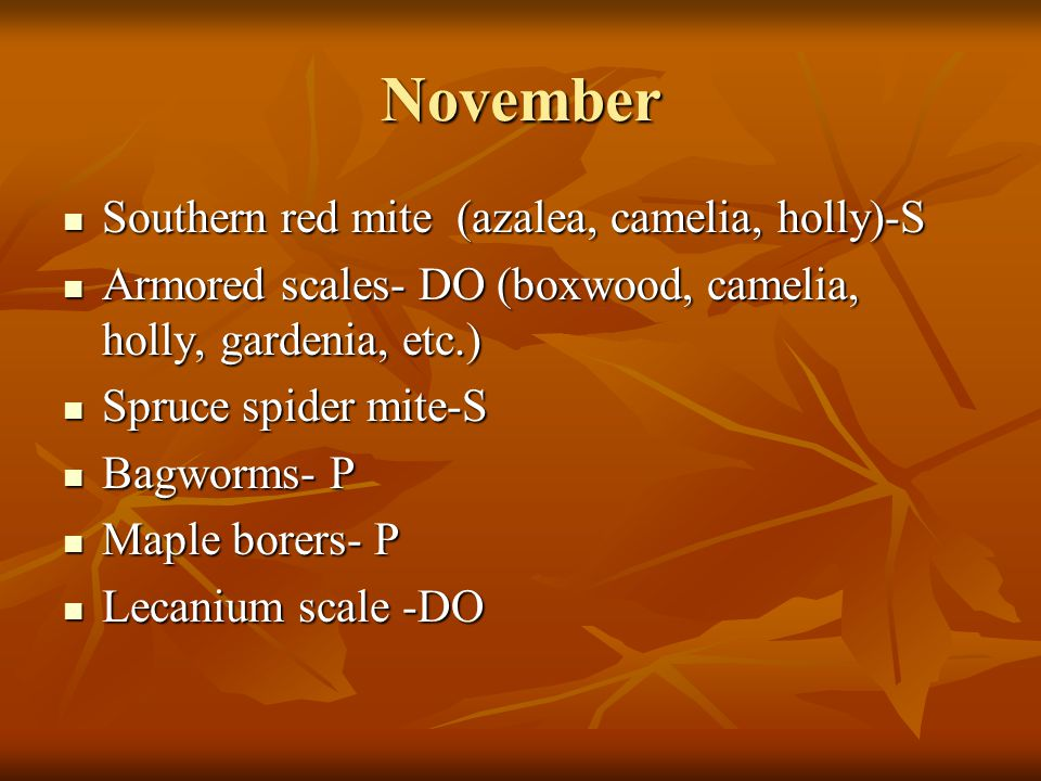 December Southern red mite (azalea, camelia, holly)-S Southern red mite (azalea, camelia, holly)-S Armored scales- DO (boxwood, camelia, holly, gardenia, etc.) Armored scales- DO (boxwood, camelia, holly, gardenia, etc.) Spruce spider mite-S Spruce spider mite-S Bagworms- P Bagworms- P Maple borers- P Maple borers- P Lecanium scale -DO Lecanium scale -DO